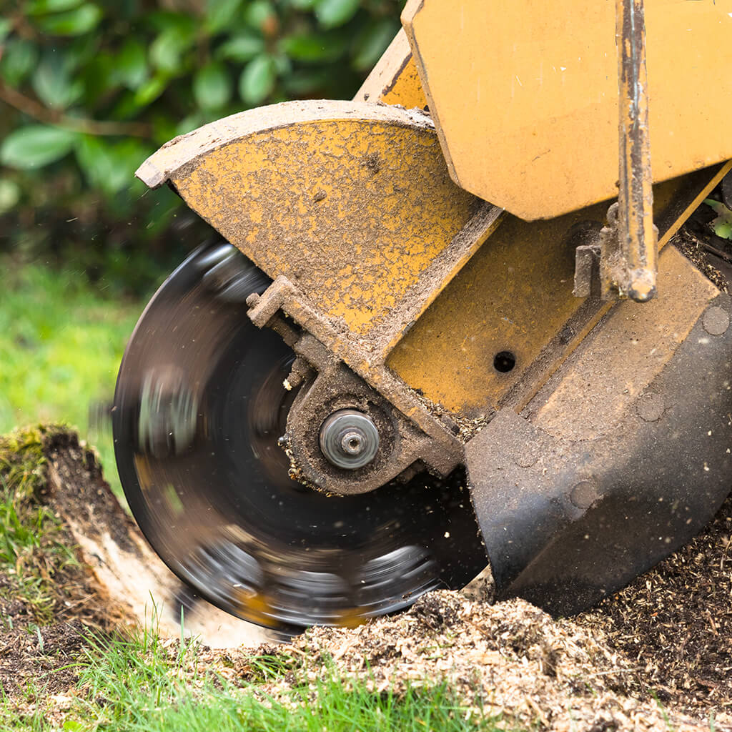 All Suburbs Stump Removal - Ivolution Consulting